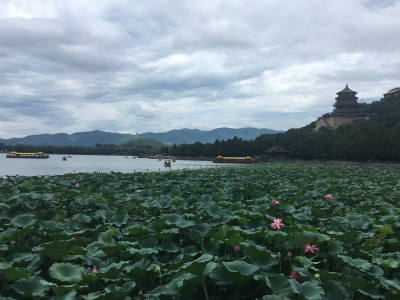 Lily Pads at The Summer Palace